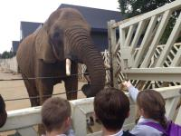 Colchester Zoo - Year 5
