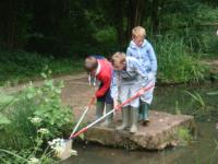 Pond Dipping at Sayers Croft